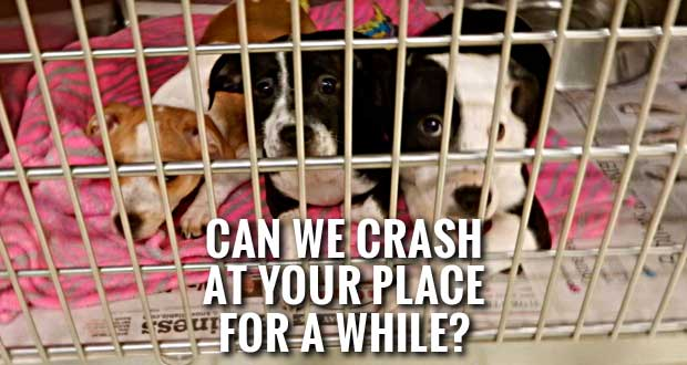 Sevier County Humane Society Looking for Puppy & Kitten Fosters