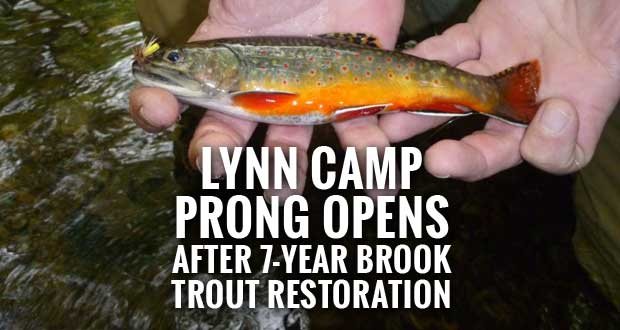 All Streams in the Great Smoky Mountains National Park Now Open to Fishing