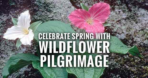 Spring is Here! Register for the Spring Wildflower Pilgrimage