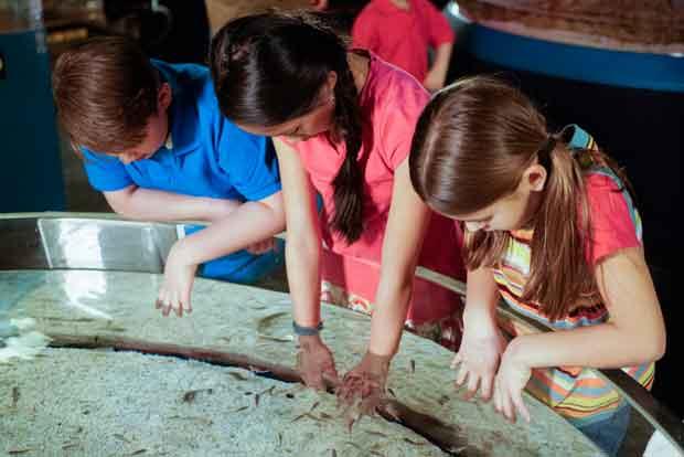 Ripley's Aquarium of the Smokies Swarm Exhibit