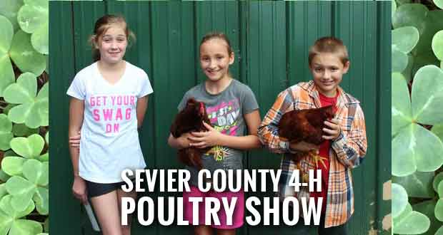 2015 Sevier County 4-H Chick Chain Winners Announced