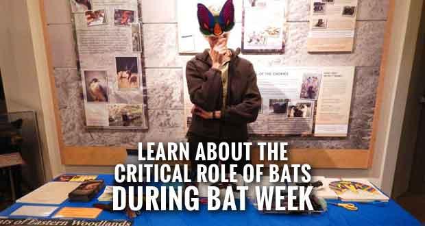 Great Smoky Mountains National Park Celebrates Bat Week