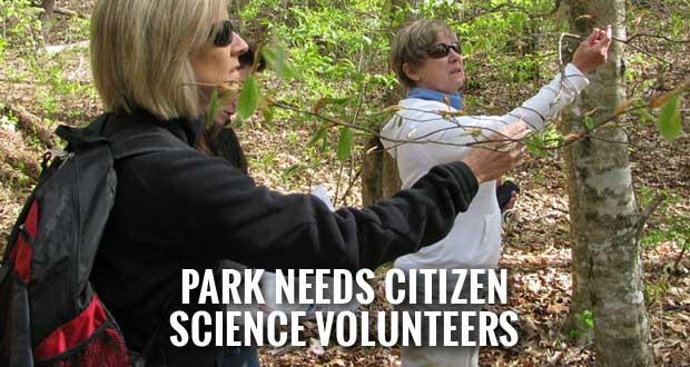 Smokies Seeks Volunteers to Collect Phenology Data
