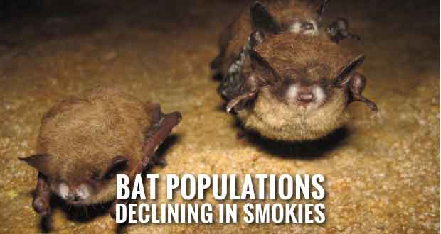 Park Limits Access in Whiteoak Sink Area to Protect Bats