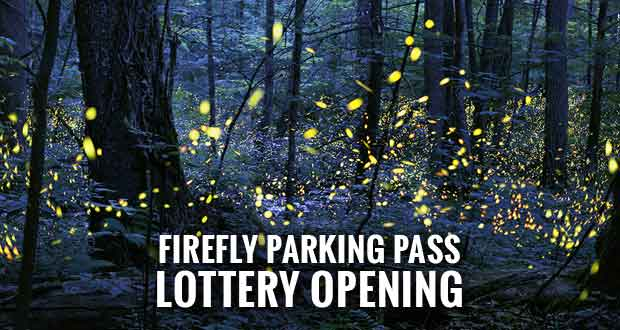 Smokies Announces Synchronous Firefly Viewing Dates