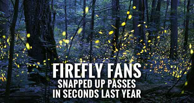 Smokies Moves to New Lottery System for Synchronous Fireflies Event Parking Passes