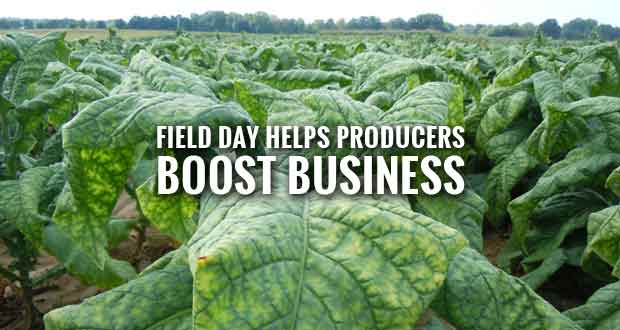 UT Institute of Agriculture Hosting Tobacco, Beef and More Field Day
