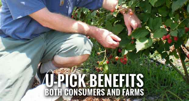 Agritourism Liability a Concern for U-Pick Farm Marketers