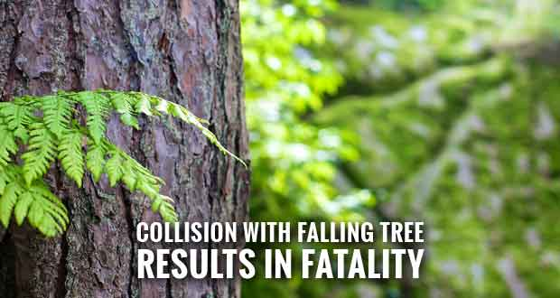Georgia Motorist Killed by Falling Tree on Gatlinburg Spur