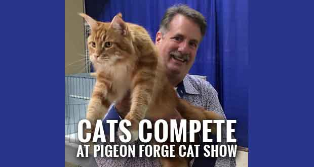 Cat Show Coming to Pigeon Forge, Donating to Fire Department
