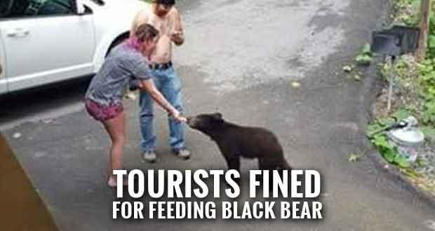 Gatlinburg Tourists Plead Guilty to Feeding Black Bear