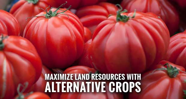 UT Extension Offers Profit and Production on Small Acreage Workshop
