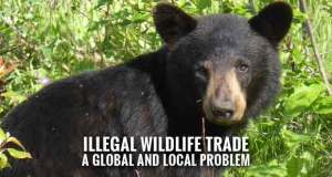 The Ugly Truth of Wildlife Trafficking: Alcatraz East Exhibit Opening Soon