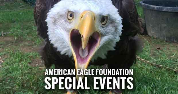Events planned to celebrate american eagle day at dollywood for American eagle cabin pigeon forge tn