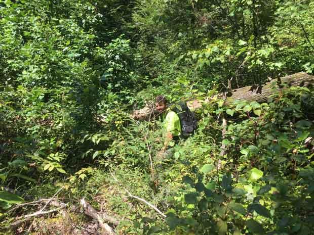 SAR team member traverses dense vegetation.