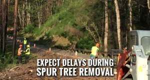Park Announces Lane Closures on Spur for Tree Removal