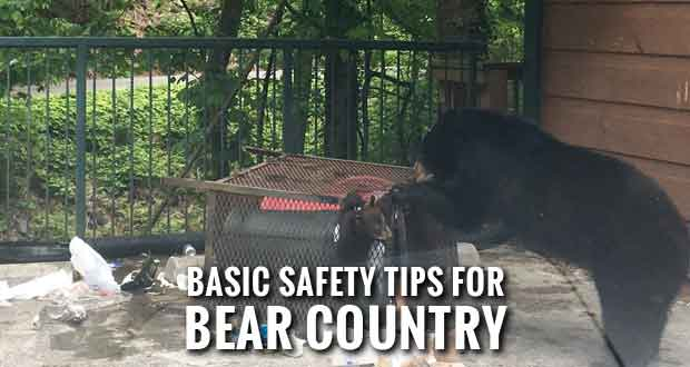 TWRA Warns of Increased Bear Activity as Bears Emerge from Winter Dens