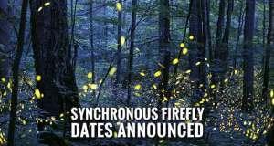Enter Lottery to View Smoky Mountains Synchronous Fireflies