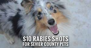 Sevier County Health Department Offers $10 Rabies Vaccinations