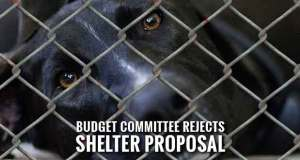 County Considers Seizing Sevier County Humane Society Property through Eminent Domain for Shelter