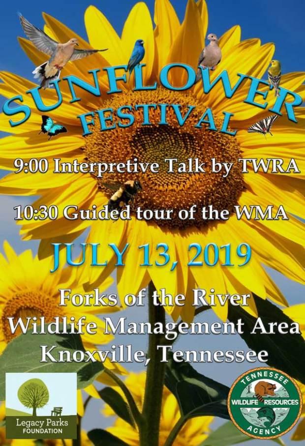 Knoxville Sunflower Festival 2019