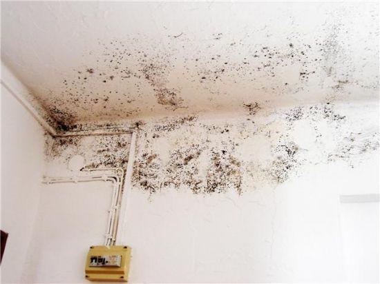 Uno de los problemas que sufre el colegio de mayores es la humedad en sus paredes/PA.