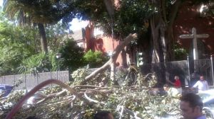 La enorme rama de ficus caída esta mañana ha obligado a cortar el tráfico/ José Ruíz