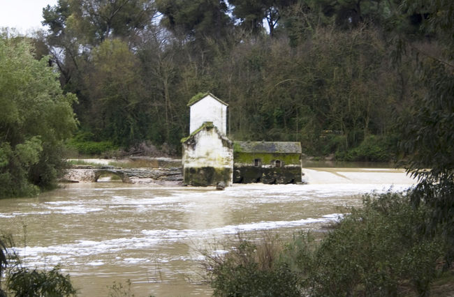 Imagen de ayer de uno de los molinos de Alcalá, en pleno cauce del Guadaíra