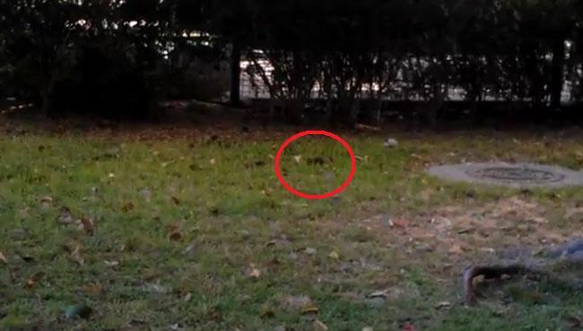 ratas-macarena-tres-huertas-240512