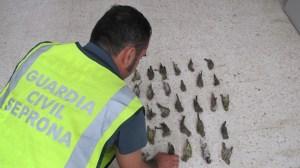 pajareros-guardia-civil-algaba-070812