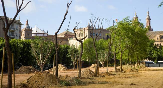 La Hispalense inicia los trabajos de reposición del arbolado en los Jardines del Prado / Sevilla Actualidad
