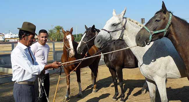 feria-caballo-coria