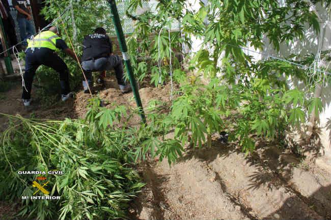marihuana el viar
