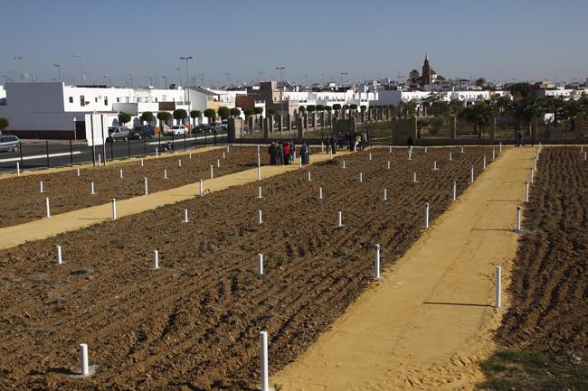 El Ayuntamiento de Los Palacios entrega los huertos sociales 2