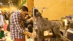 FOTO AMBIENTE salon canino2014- 19