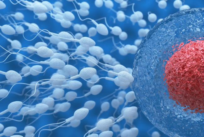 Una-proteina-del-esperma-clave-para-el-exito-del-anticonceptivo-masculino image 380