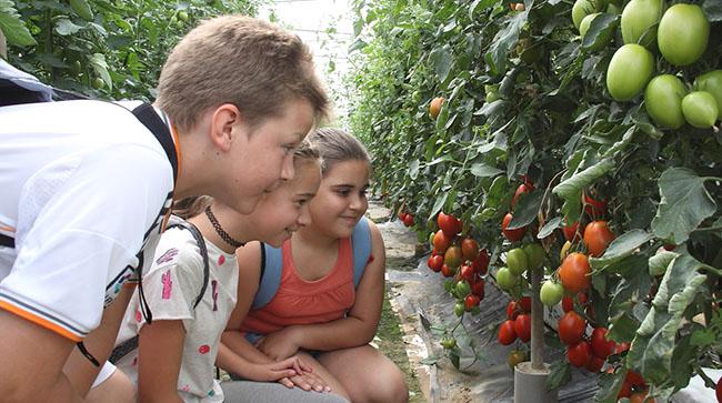 visita-escolares-invernadero-tomates