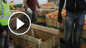 droga-en-naranjas