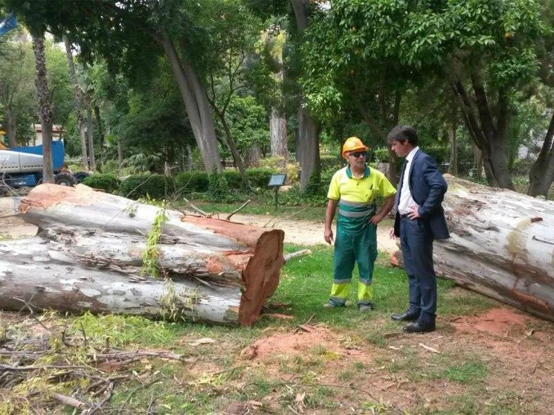 Saneamiento de árboles en Parque María Luisa /Ayto. Sevilla