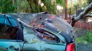 Destrozos en uno de los coches por la caída de la rama / @eveliarincon