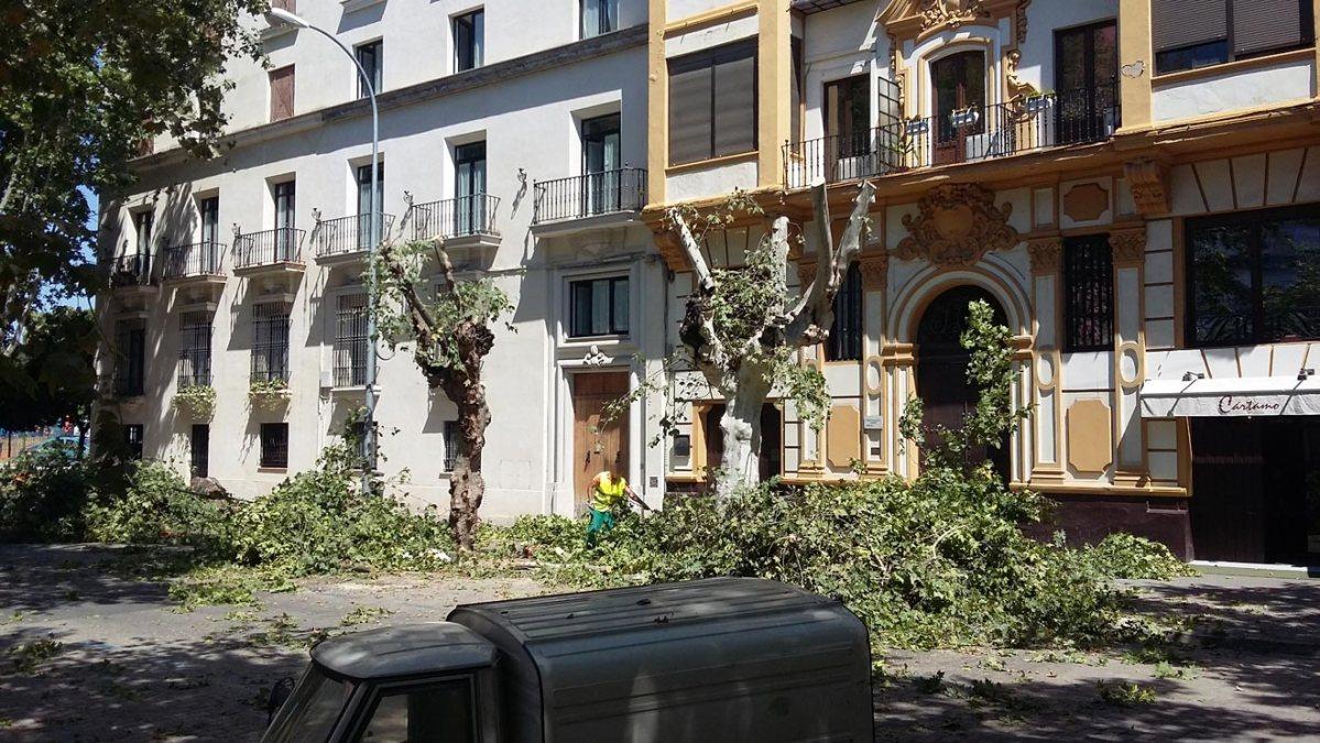 Tala de árboles en la Avenida de Cádiz /IU