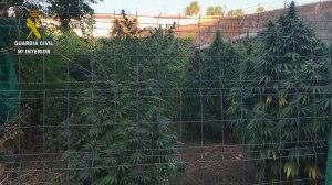 Cultivo de marihuana /Guardia Civil