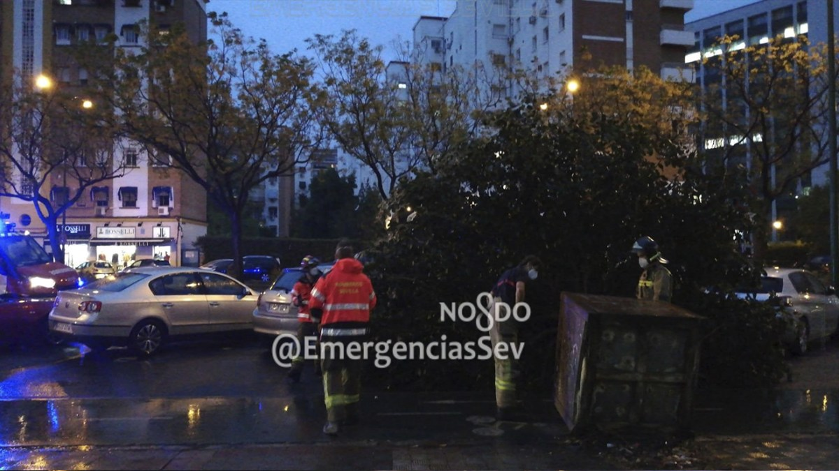 Un árbol caído por la fuerza del viento / Archivo Emergencias Sevilla