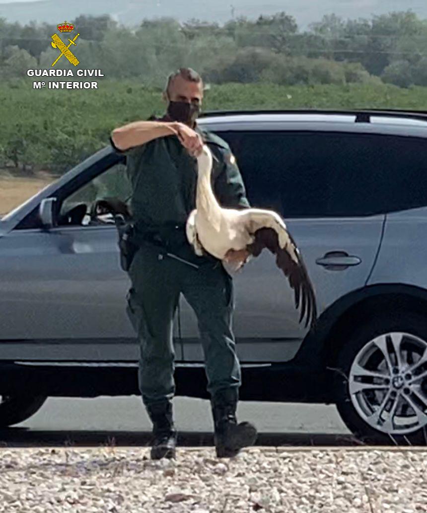 La Guardia Civil captura una cigüeña herida