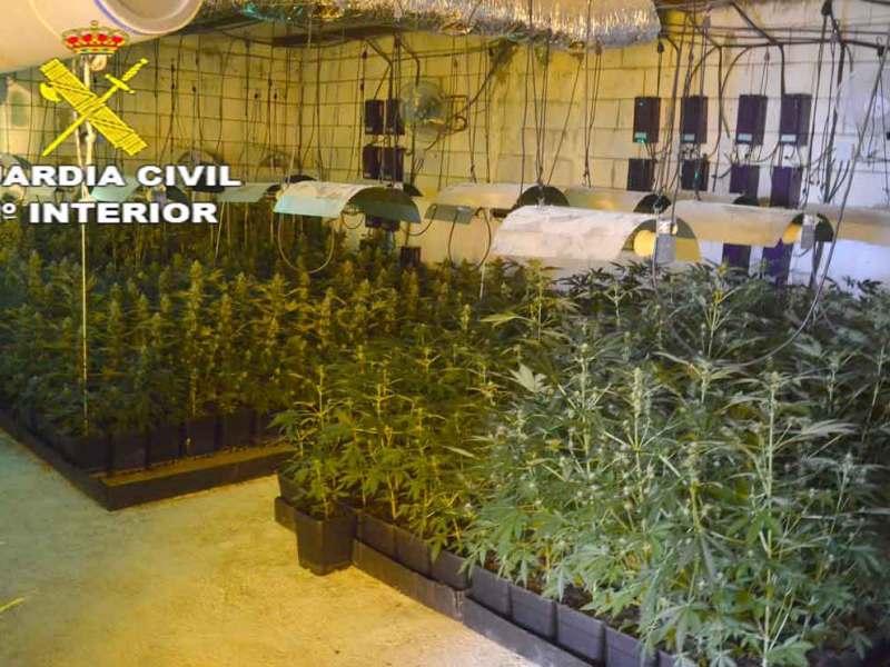 Plantación de marihuana desmantelada en San José de la Rinconada