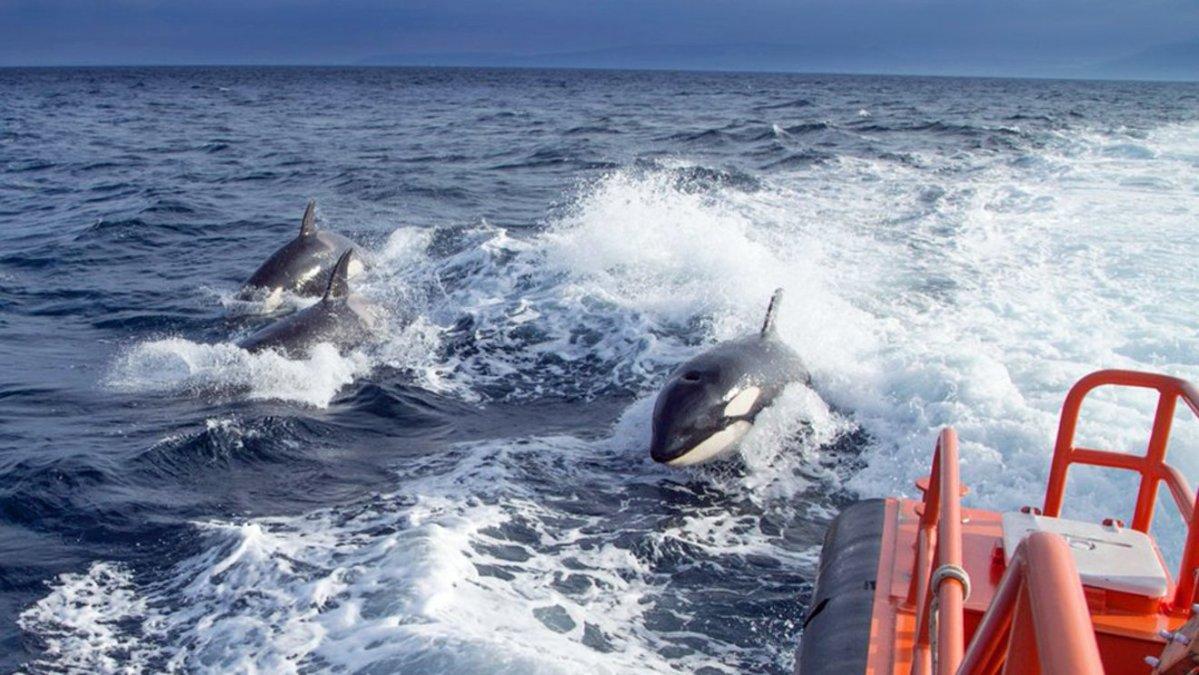 Orcas / Salvamento Marítimo