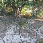 La sequía obliga a aplicar restricciones de agua en el campo sevillano