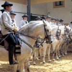 «Como bailan los caballos andaluces», este miércoles en la Maestranza