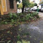 Preocupación por las numerosas caídas de árboles