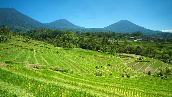 Desa Jatiluwih Tabanan Bali